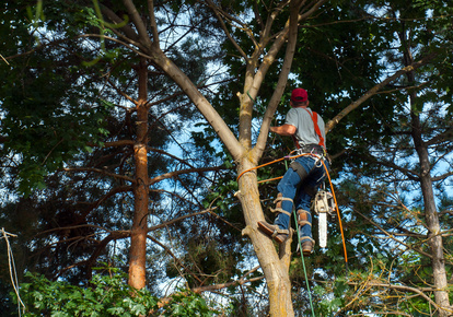 Tree Care Appointment Software