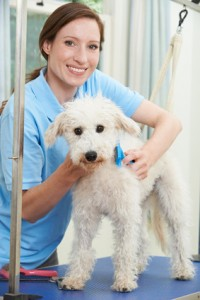 Appointment Apps For Mobile Dog Grooming
