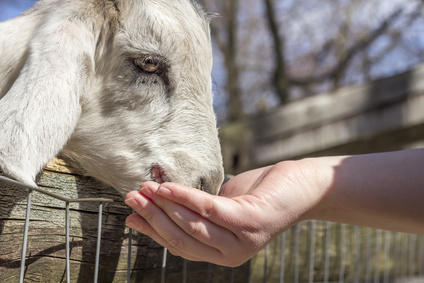 Petting Zoo Party Booking Software
