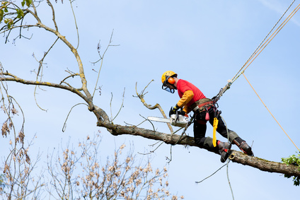 Tree Trimmer Booking Software