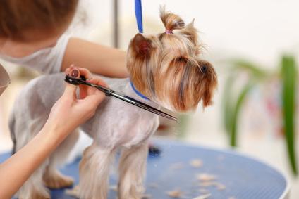 dog grooming online scheduling software